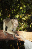 Contact with monkey — Stockfoto