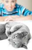 I love cats — Stock Photo