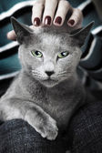 Wilde kat — Stockfoto