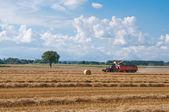 Combine harvesting ripe wheat on farm field — Stock Photo