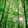 Sunlight being detectable in trees in the forest - Stock Photo