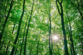 Sunlight being detectable in trees in the forest — Stock Photo