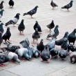 Flock of pigeons on the market - Stock Photo