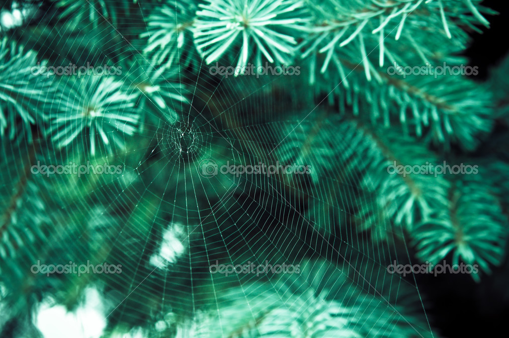 Spider web on the branch — Stock Photo #4227699