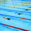 Stockfoto: Swimmers swimming in pool