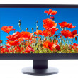 Poppies field on TV screen — Stock Photo