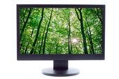 Zonlicht wordt aantoonbaar in bomen in het forest op tv-scherm — Stockfoto