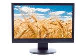 Gold wheat on farm field on TV sreen — Stock Photo