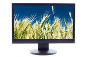 Green wheat on farm field on TV sreen — Stock Photo