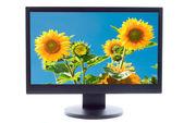 Słoneczniki na ekranie telewizora — Zdjęcie stockowe