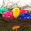 Stock Photo: Easter basket with Easter eggs and chicks