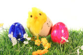 Easter eggs and chicks on a meadow — Stock Photo