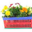 Balcony plants in a folding box — Stock Photo