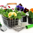 Flower Shopping — Stock Photo