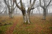 Höstens dimmiga skog med nedfallna löv. — Stockfoto