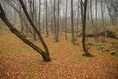 落とされた葉と秋の霧の森. — ストック写真