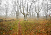 Autumn misty forest with fallen leaves. — Stock Photo
