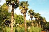 Linha de árvores de palma. — Foto Stock