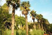 Palmiye ağaçları çizgi. — Stok fotoğraf