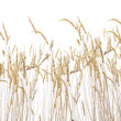 Late summer grass — Stock Photo