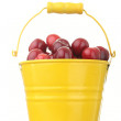 Cherries in colorful yellow metal bucket — Stock Photo