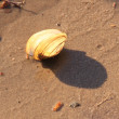 Shellfish shlell on sand - Stock Photo