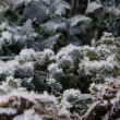 Frozen green plants - Stock Photo
