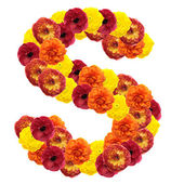 Alphabet of flowers — Stock Photo