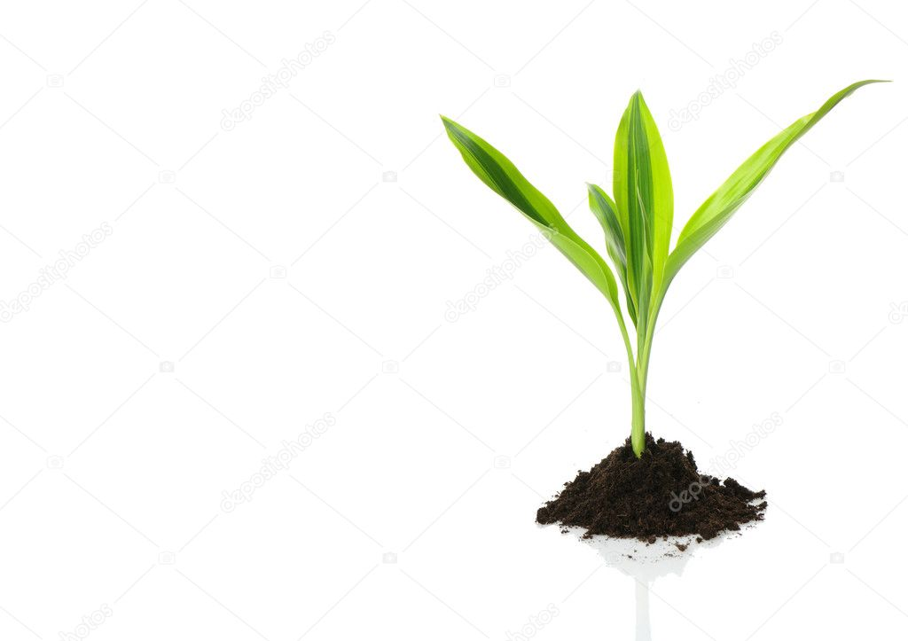 New Life design (growth concept)  — Stock Photo #4867962