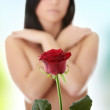 Red rose — Stock Photo #5007216