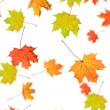 Royalty-Free Stock Photo: Autumn background