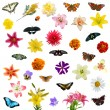 Large set of butterflies and flowers - Foto de Stock  