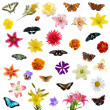 Large set of butterflies and flowers — Stock Photo