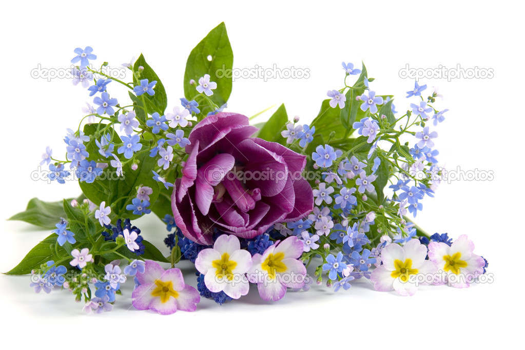 Bouquet of spring flowers on a white background — Stock Photo #4640314