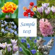 Spring flowers, collage — Stock Photo #4724208