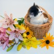 Little kitten in a basket and flowers — Stock Photo