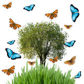 Tree, grass and butterflies — Stock fotografie