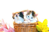 Little kittens in a basket and flowers — Stock Photo
