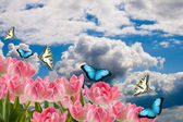 Spring flowers and butterflies — Stock Photo