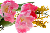 Bouquet of mimosa and tulips — Stock Photo