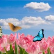 Stock Photo: Composition from spring flowers and butterflies
