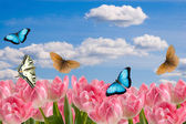 Composition from spring flowers and butterflies — Stock Photo