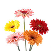 Bouquet gerberas — 图库照片