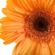 Royalty-Free Stock Photo: Orange gerbera