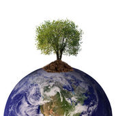 Tree growing from the earth — Stock Photo