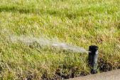 Lawn Sprinkler — Stock Photo