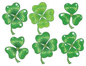 Clovers leaf — Stock Photo