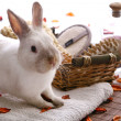 Rabbit with spa products — Stockfoto