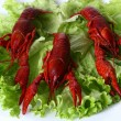 Red claw with green salad - Stock Photo