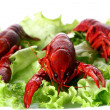 Red claw with green salad — Stock Photo
